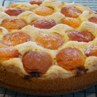 Cornmeal Cake with Apricots